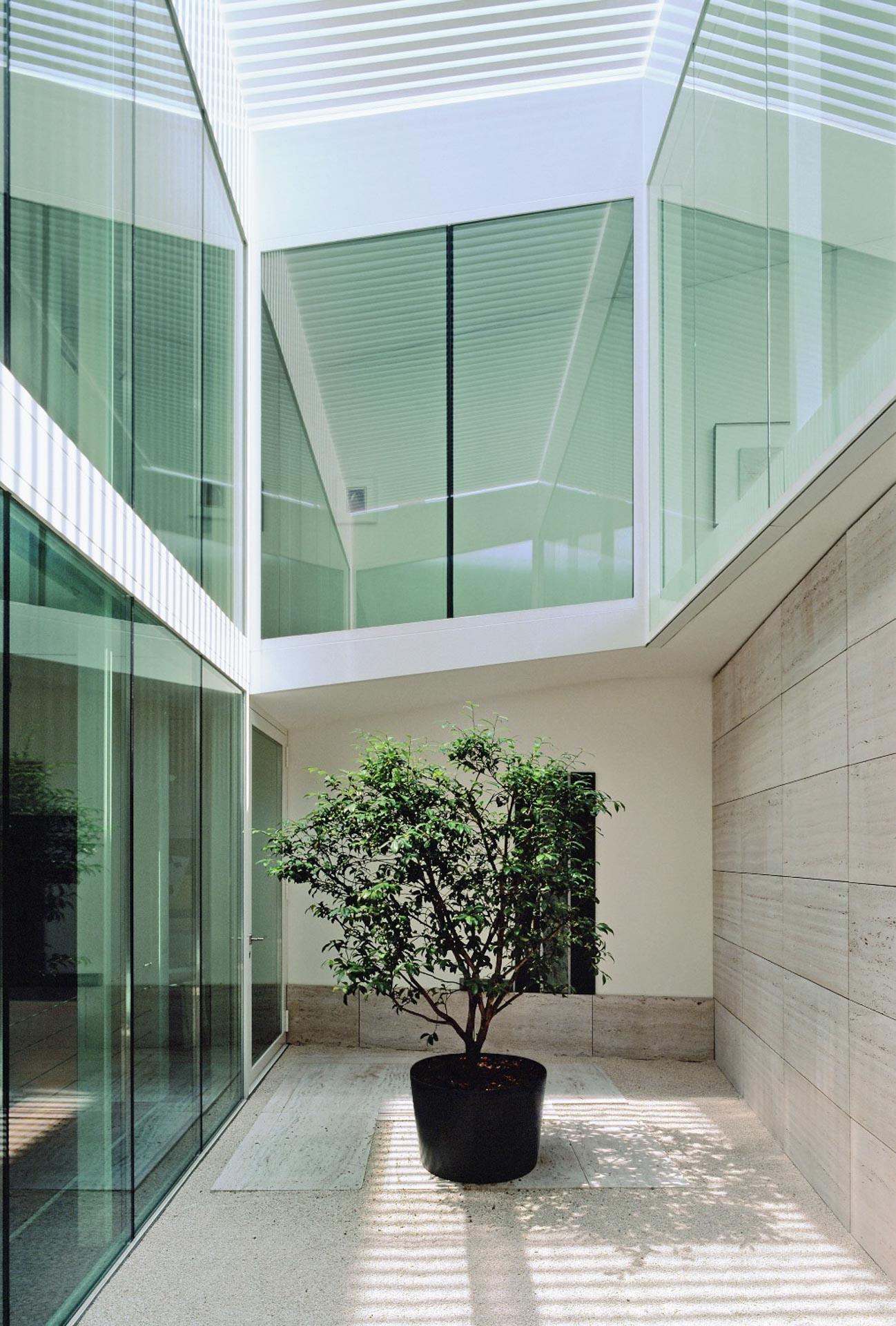 corte albero interno casa